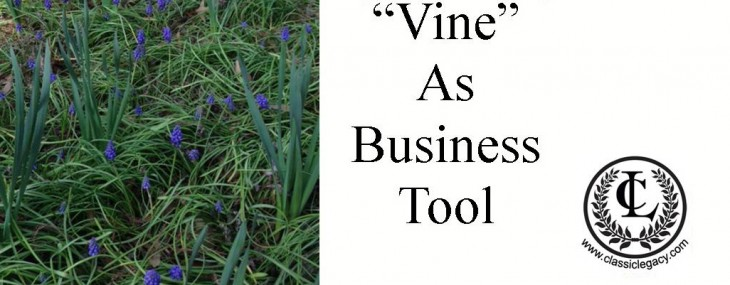 Learning How to Use Vine for Business