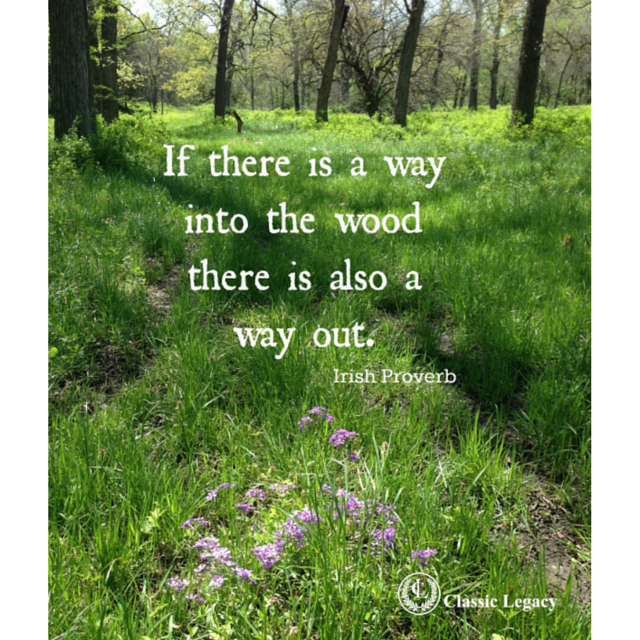 Way into the Woods